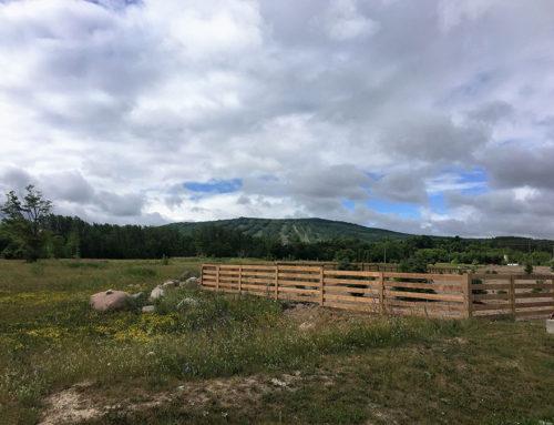 Fences 16